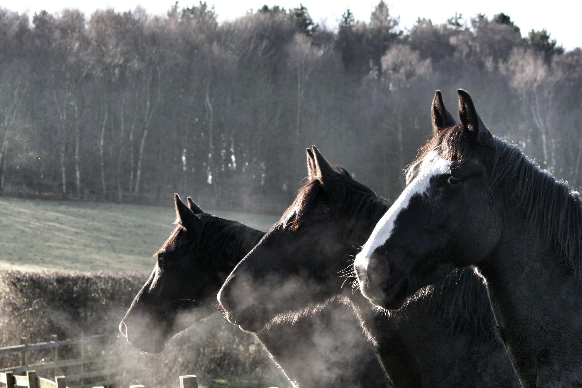 Free stock photo of horse head, horses