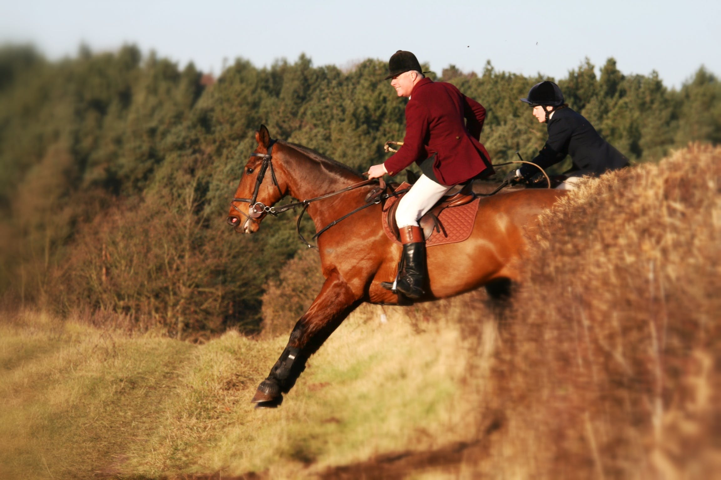 Free stock photo of horse, horse rider, horseman, hunter