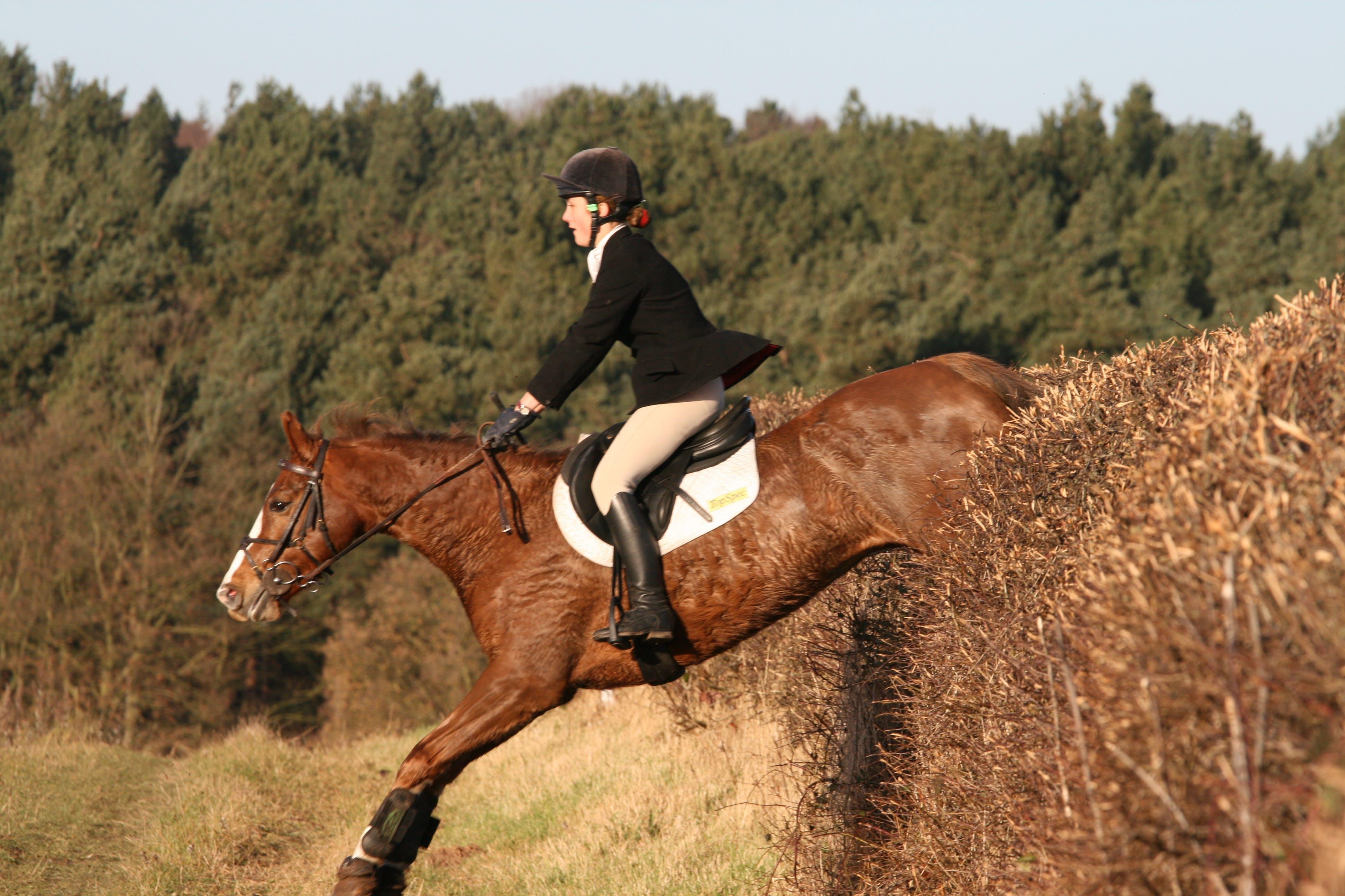 horse, horse rider, horseback riding