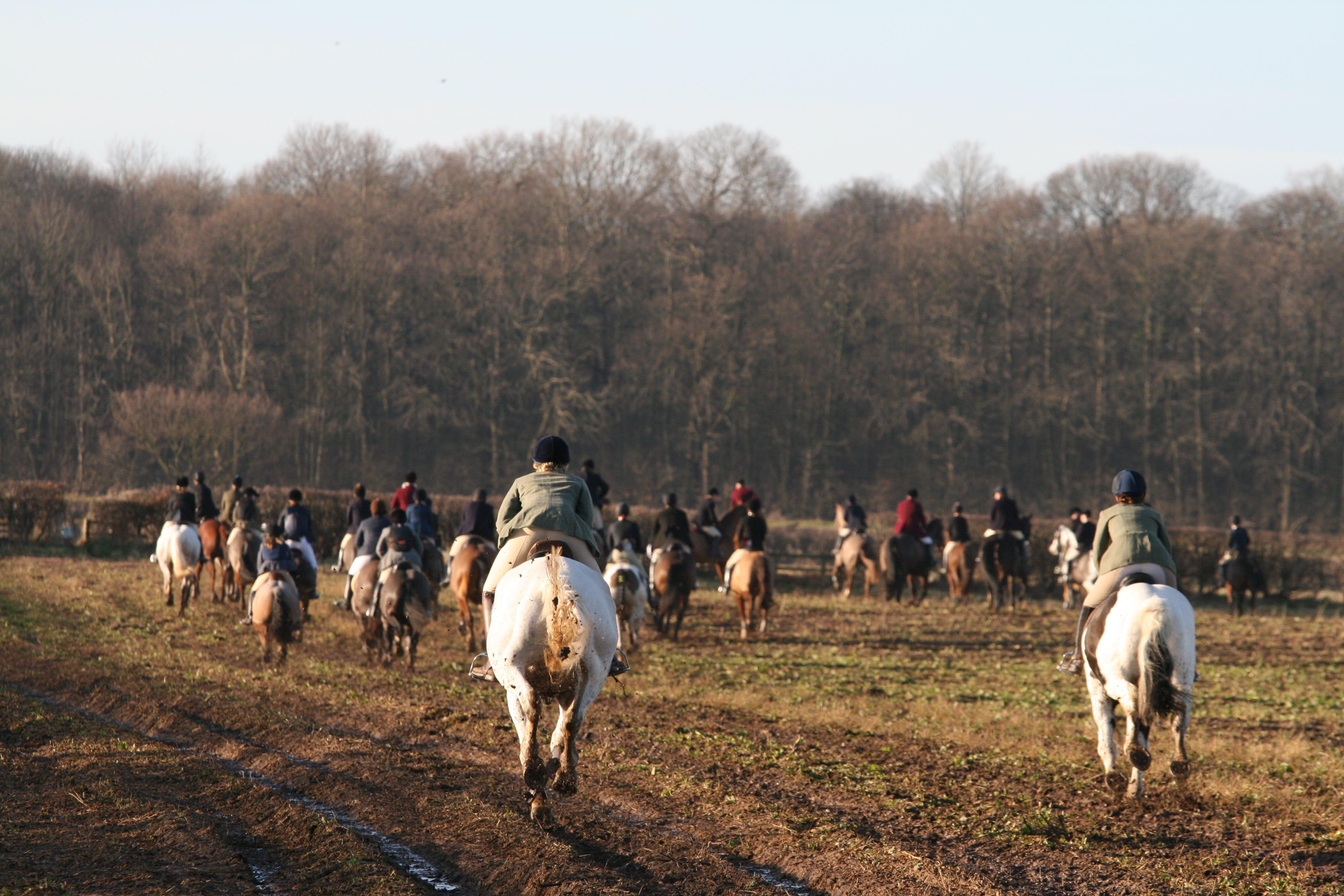 Free stock photo of horseback riding, horsemen, horses