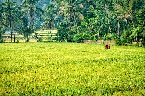 Fotos de stock gratuitas de agricultura, al aire libre, arboles, campo