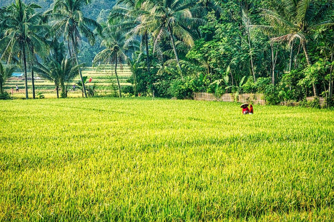 a l'aire lliure, agricultura, arbres