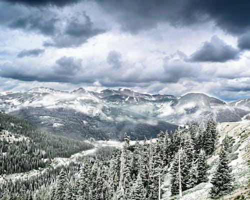 Foto d'estoc gratuïta de arbres, colorado, hivern, muntanya