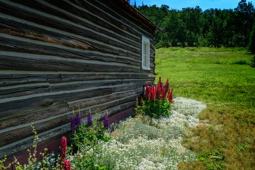 Free stock photo of bed of flowers, flowers, landscape, log cabin