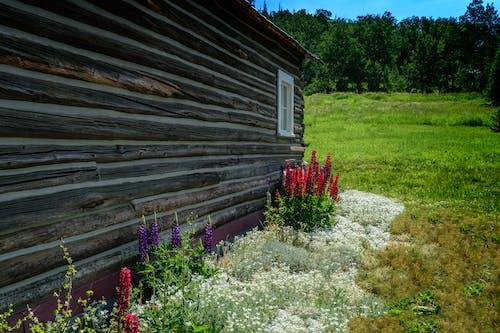 Foto d'estoc gratuïta de cabana de fusta, flors, llit de flors, paisatge