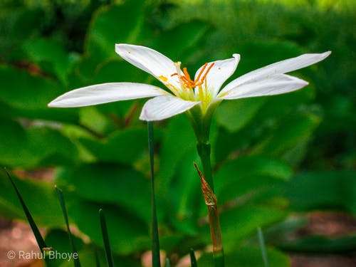 Безкоштовне стокове фото на тему «вайт квітка, квітка, прекрасна квітка»