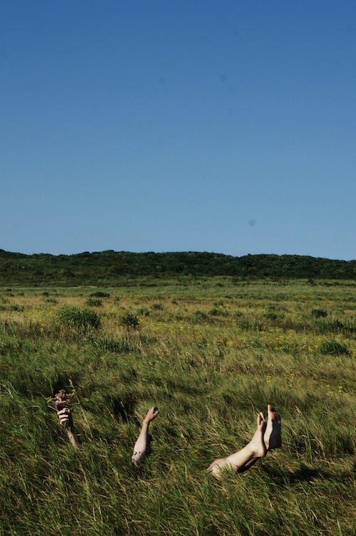 Imagine de stoc gratuită din câmp, câmp de iarbă, cer, creștere