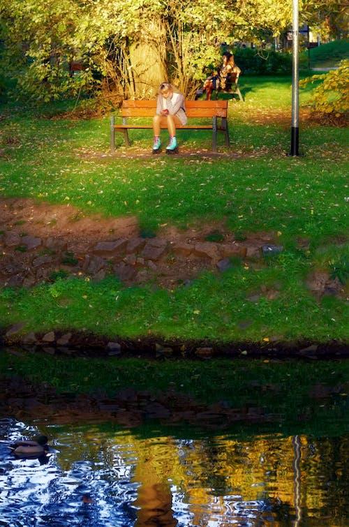 Foto profissional grátis de água, árvores, assento, assentos