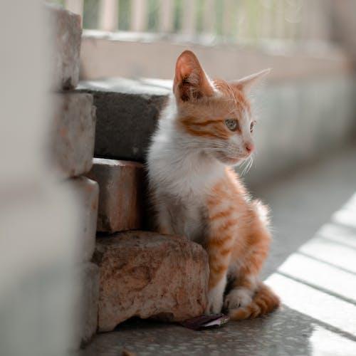Photos gratuites de chats