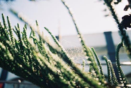 녹색, 식물, 피사계 심도의 무료 스톡 사진