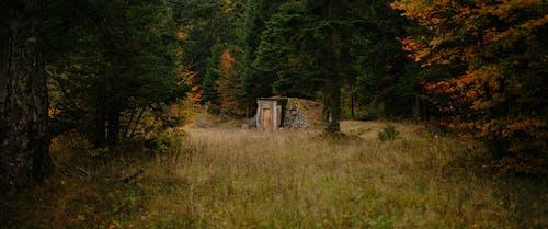 Ingyenes stockfotó 4k-háttérkép, az ősz színei, csupasz fák, elhagyatott témában