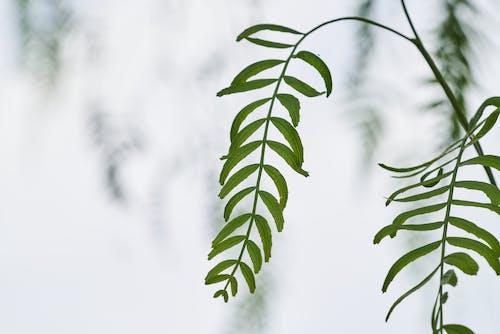 Immagine gratuita di foglie, giardino, impianto, macro