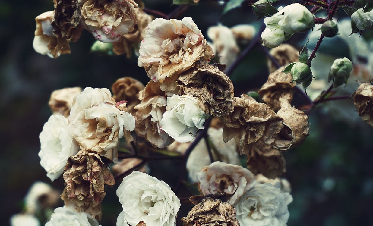 White and Brown Petaled Flowers Close-up Photography
