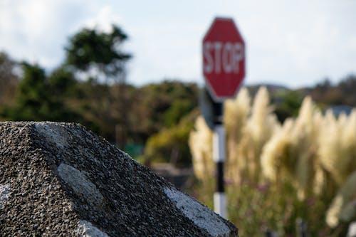 Foto profissional grátis de floresta, fundo embaçado, muro de pedra, parada