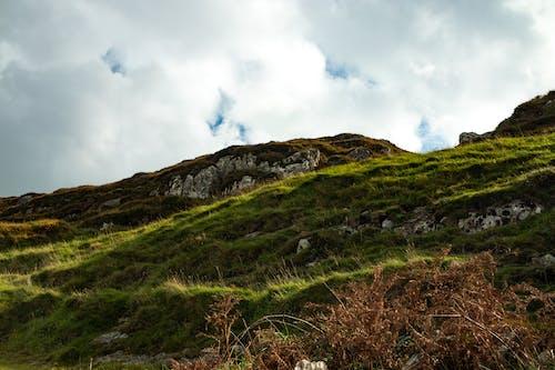 Foto profissional grátis de campina, campo de grama, cheio de grama, colina