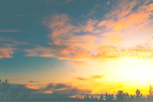 Бесплатное стоковое фото с виброфон, винтажный вид, закат, летающие птицы