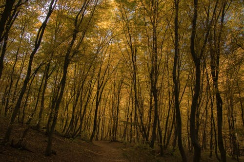 Free stock photo of autumn, forest, golden, leaf