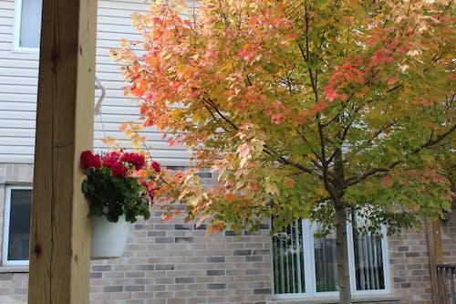 Foto d'estoc gratuïta de arbre, finestra, flors, maons