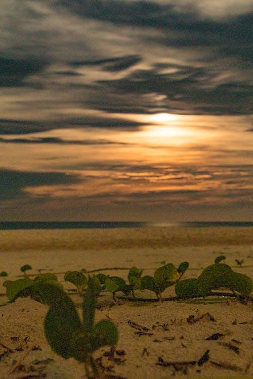 Free stock photo of beach, beach sand, beach view, beach waves