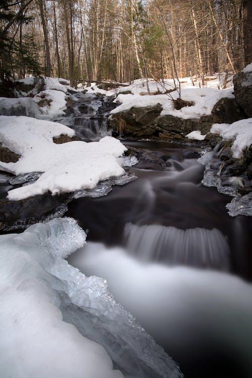 คลังภาพถ่ายฟรี ของ กระแสน้ำ, การแช่แข็ง, งดงาม, ต้นไม้