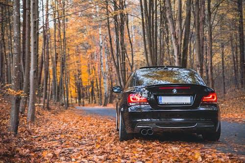 Foto profissional grátis de bmw 135i, declínio, floresta no outono