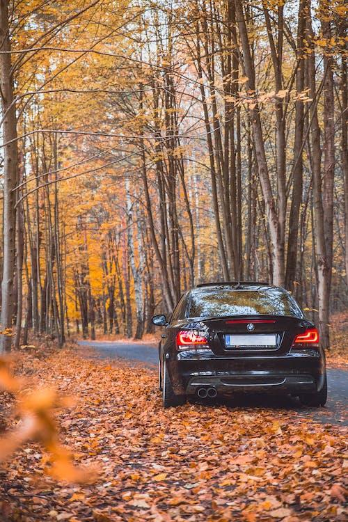 Foto profissional grátis de bmw 135i, carro preto, cores do outono, coupe