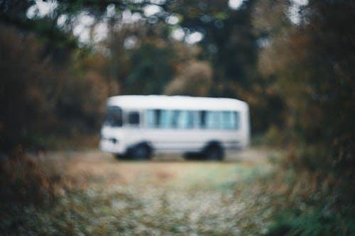 Kostenloses Stock Foto zu bokeh, bus, natur