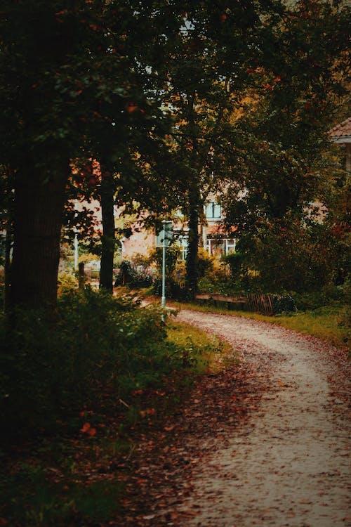Ảnh lưu trữ miễn phí về ánh sáng ban ngày, cây, cỏ, con đường