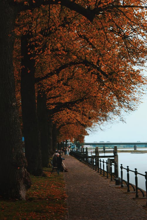 가을, 가을 색, 강, 경치의 무료 스톡 사진