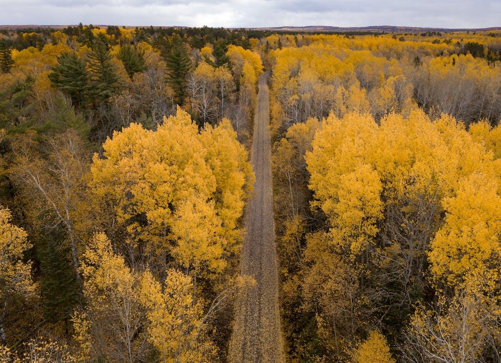 autumn, color, path