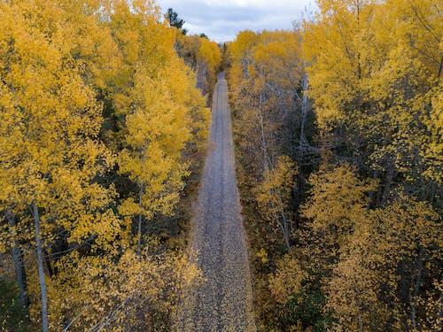 Gratis lagerfoto af blade, efterår, efterår farve, efterårsblade