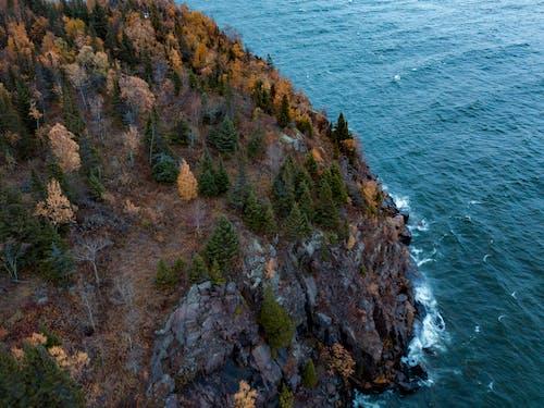 Ilmainen kuvapankkikuva tunnisteilla jyrkänne, kallio, puut, rannikko