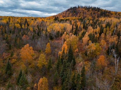 Ilmainen kuvapankkikuva tunnisteilla lehdet, metsä, Syksy, syksyn väri