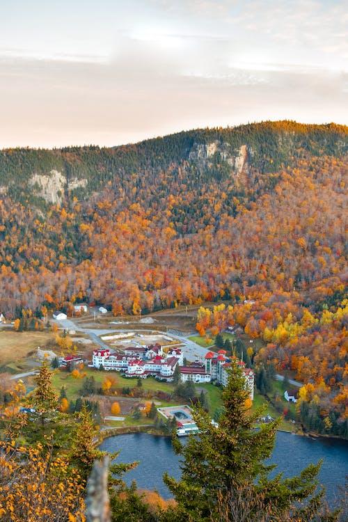 가을, 가을 분위기 숲, 가을 색, 나무 숲의 무료 스톡 사진