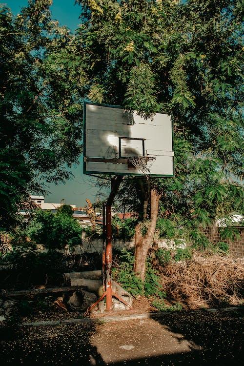 Kostenloses Stock Foto zu ast, basketball platz, bäume, draußen