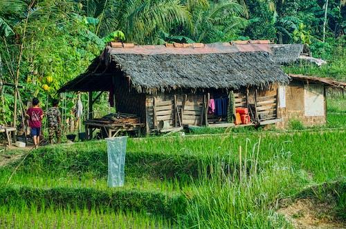 Gratis lagerfoto af bungalow, gård, græs, hjem