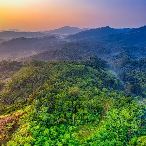 Imagine de stoc gratuită din apus, arbori, de deasupra, fotografie cu drona