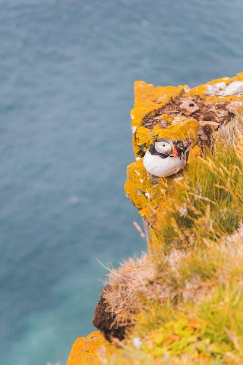 Duck On Cliff