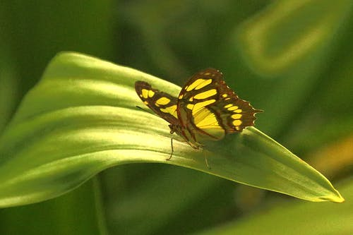 Foto stok gratis kebun binatang, kuning, kupu-kupu, meninggalkan