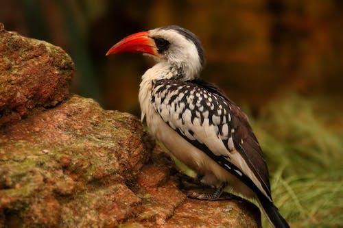 Foto stok gratis alam, kebun binatang