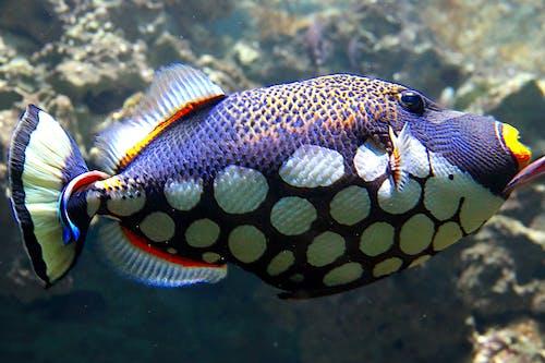 Δωρεάν στοκ φωτογραφιών με ενυδρείο, ζωολογικός κήπος, υποβρύχια ζωή, ψαρι κλοουν