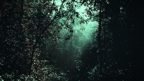 令人不寒而慄的, 冷靜, 叢林, 恐怖 的 免费素材照片
