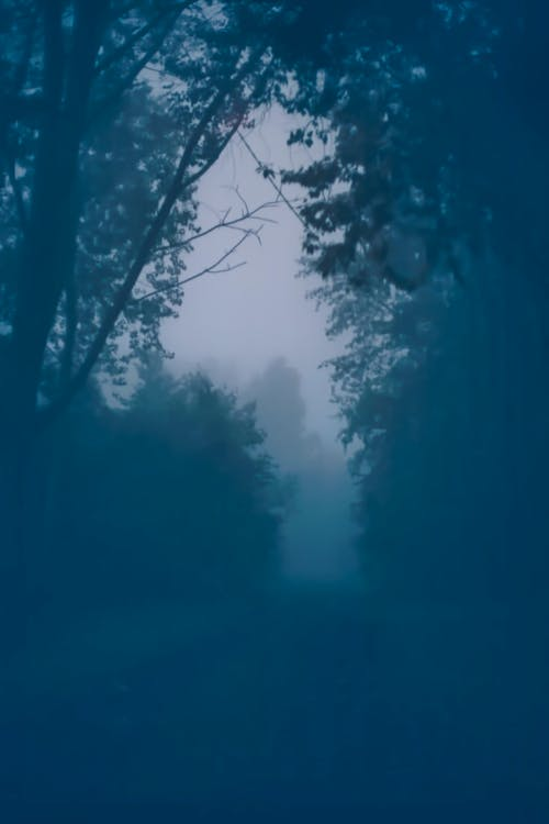 Free stock photo of dark, forest, horror