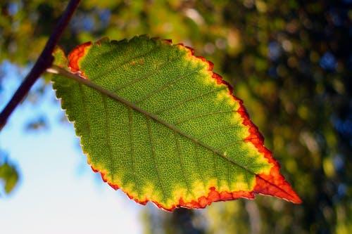 Foto d'estoc gratuïta de arbre, caure, fons de pantalla, iran