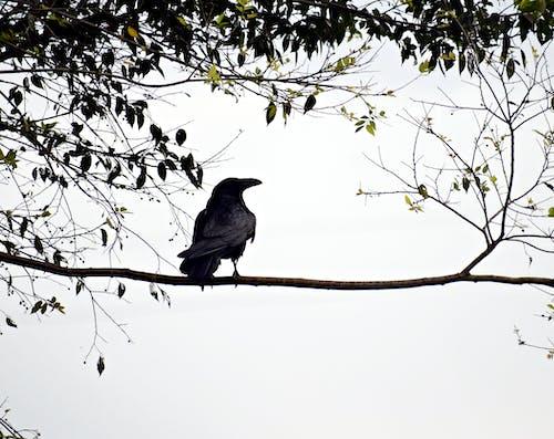 Fotos de stock gratuitas de alas, animal, árbol, colorido