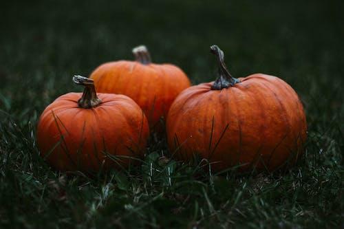 Up close photo of pumpkins