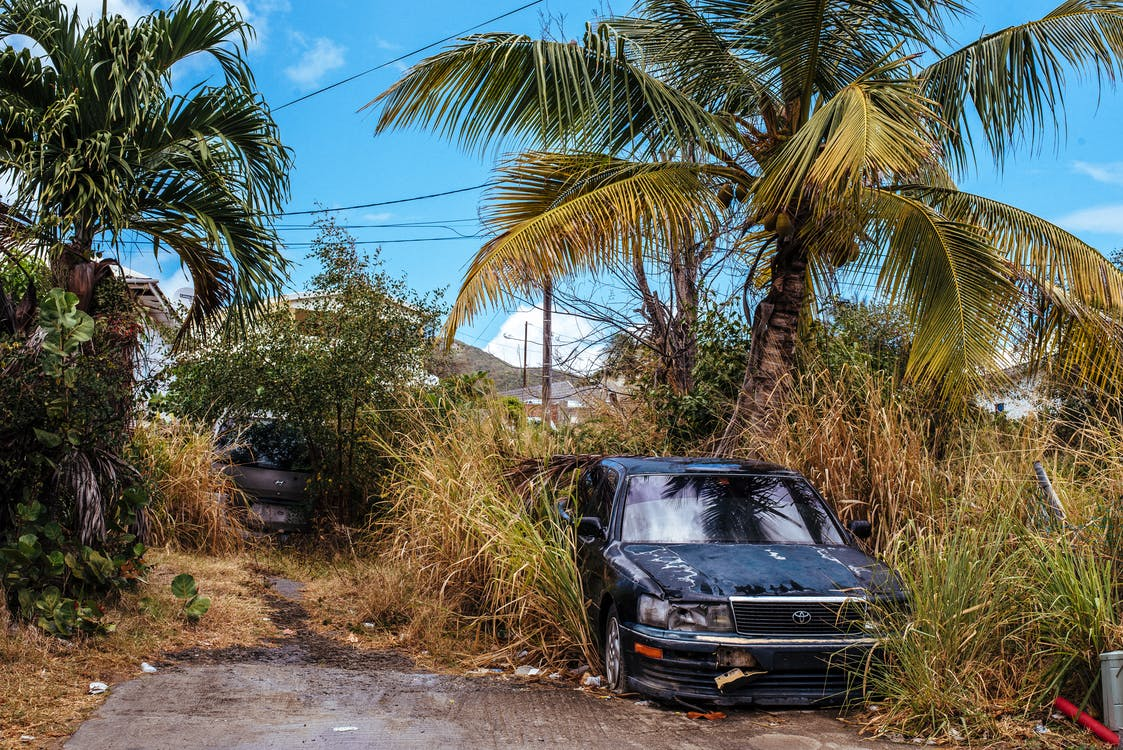 A Broken-down Black Car Surrounded By Tall Weeds
