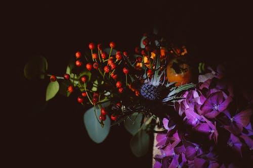 Gratis arkivbilde med blad, blomst, dekorasjon, farge
