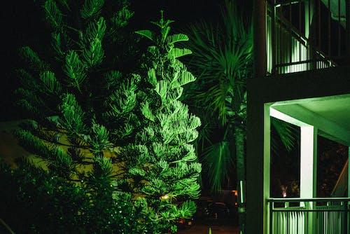 Δωρεάν στοκ φωτογραφιών με αφαίρεση, δέντρο, διακόσμηση, ελαφρύς