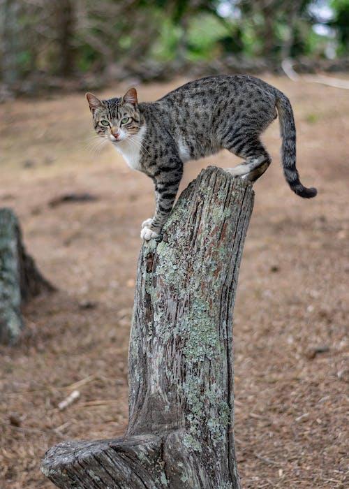 Foto stok gratis foto hewan, kucing, kucing besar, potret